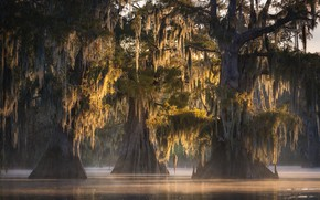 Picture swamp, backlight, Louisiana, fall colors, spanish moss, Atchafalaya Basin, Misty Trio