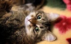 Picture Wallpaper, Cat, Animal