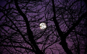Picture the sky, night, branches, nature, tree, the moon, the full moon