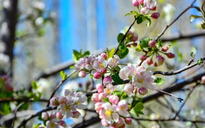Picture branches, nature, flowering, bokeh