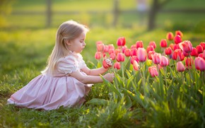 Wallpaper flowers, girl, tulips