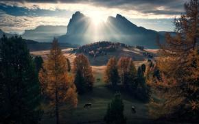 Picture the sun, rocks, cows, meadows