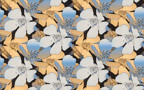 Picture background, pattern, Background, Pattern, Floral