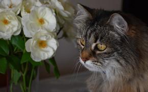 Picture cat, cat, look, face, flowers, portrait, bouquet