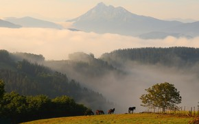 Picture forest, summer, trees, landscape, mountains, nature, fog, dawn, hills, tops, horses, morning, horse, pasture, the …