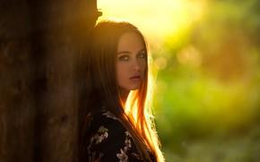 Wallpaper girl, Model, green eyes, long hair, photo, sunset, tree, lips, face, brunette, trunk, portrait, mouth, ...