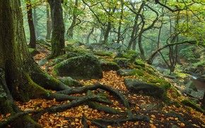 Picture autumn, forest, trees, nature, roots, stones, England, moss, river, The Peak District