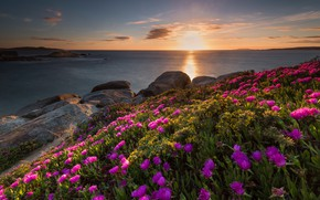 Picture sea, summer, the sky, the sun, clouds, light, sunset, flowers, stones, dawn, shore, bright, slope, …