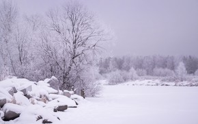 Picture snow, landscape, tree, stone, the snow