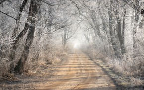 Picture frost, road, forest, fog