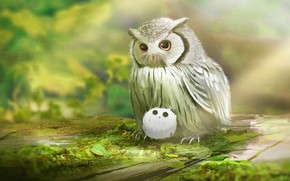 Picture nature, owl, owlet