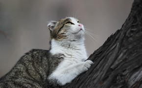 Picture cat, look, tree