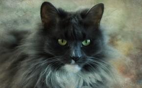 Picture portrait, look, cat, grey, face, fluffy, cat