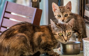 Picture cat, cat, look, face, cats, pose, kitty, two, pair, kittens, bowl, kitty, box, a couple, …
