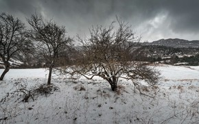 Picture snow, trees, spring