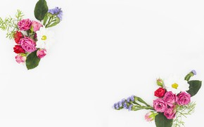 Picture white, flowers, background, flower, pink, bouquet, roses, bouquets