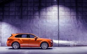 Picture machine, light, lights, Bentley, optics, Speed, crossover, Bentayga