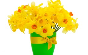 Picture flowers, glass, bouquet, white background, daffodils