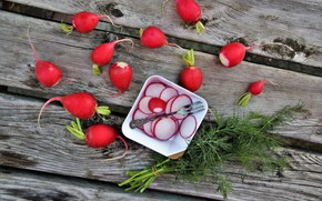 Picture dill, plate, plug, radishes