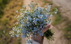 Picture hands, gently, forget-me-nots