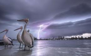 Picture birds, night, shore