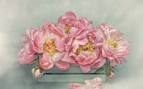 Picture flowers, background, bouquet, petals, art, stamens, pink, box, painting, peonies
