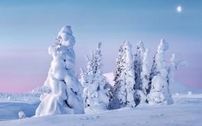 Picture winter, snow, trees, landscape, nature, ate, Ural, UTR