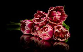 Picture flowers, reflection, bouquet, tulips, red, black background