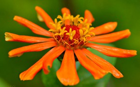 Picture Macro, Flower, Flower, Macro
