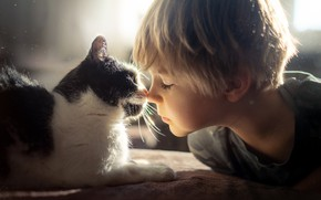 Picture friends, boy, kitty