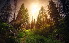 Wallpaper forest, nature, morning