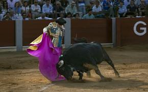 Picture arena, bull, Matador