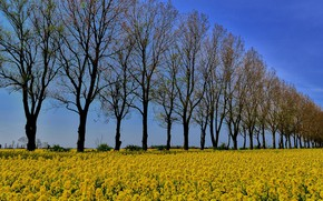 Picture field, trees, flowers, The forest