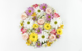 Picture white, flowers, background, comosite