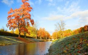 Picture frost, autumn, grass, leaves, trees, landscape, nature, Park, channel, Tsarskoye Selo