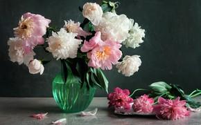 Picture water, drops, flowers, petals, vase, peonies
