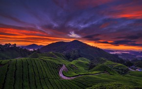 Picture clouds, mountains, hills, glow, plantation