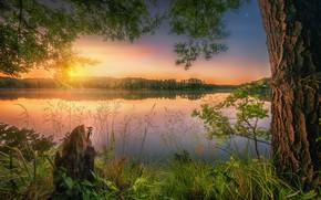 Wallpaper summer, grass, sunset, lake, reflection, tree