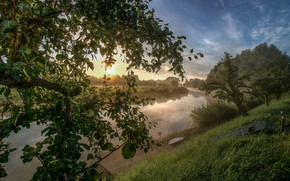Picture grass, landscape, nature, fog, Rosa, river, tree, beauty, morning, ladder, the bridge
