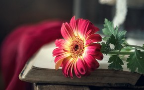 Picture flower, background, book