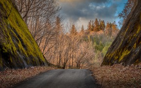 Picture road, forest, mountain