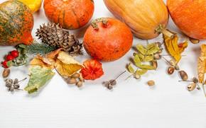 Picture autumn, leaves, photo, pumpkin, bumps