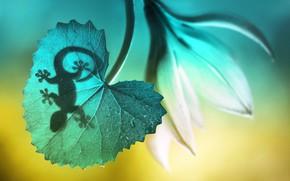 Picture flower, macro, nature, sheet, shadow, Gecko, lizard