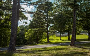 Picture forest, summer, light, trees, branches, nature, Park, trunks, track, pine, path, lawn, crown