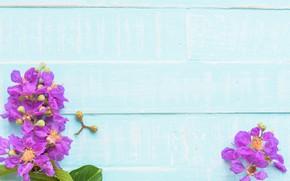 Picture flowers, background, tree, blue, Board, wood, blue, flowers, purple