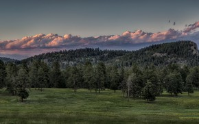 Picture trees, mountains, the evening