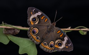 Picture butterfly, wings, eyes