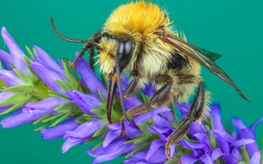 Picture macro, flowers, yellow, green, bee, background, wool, insect, bumblebee, lilac