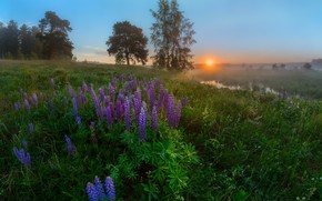 Picture the sun, flowers, fog, dawn, meadow