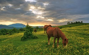 Picture the sky, flowers, hills, horse, meadow